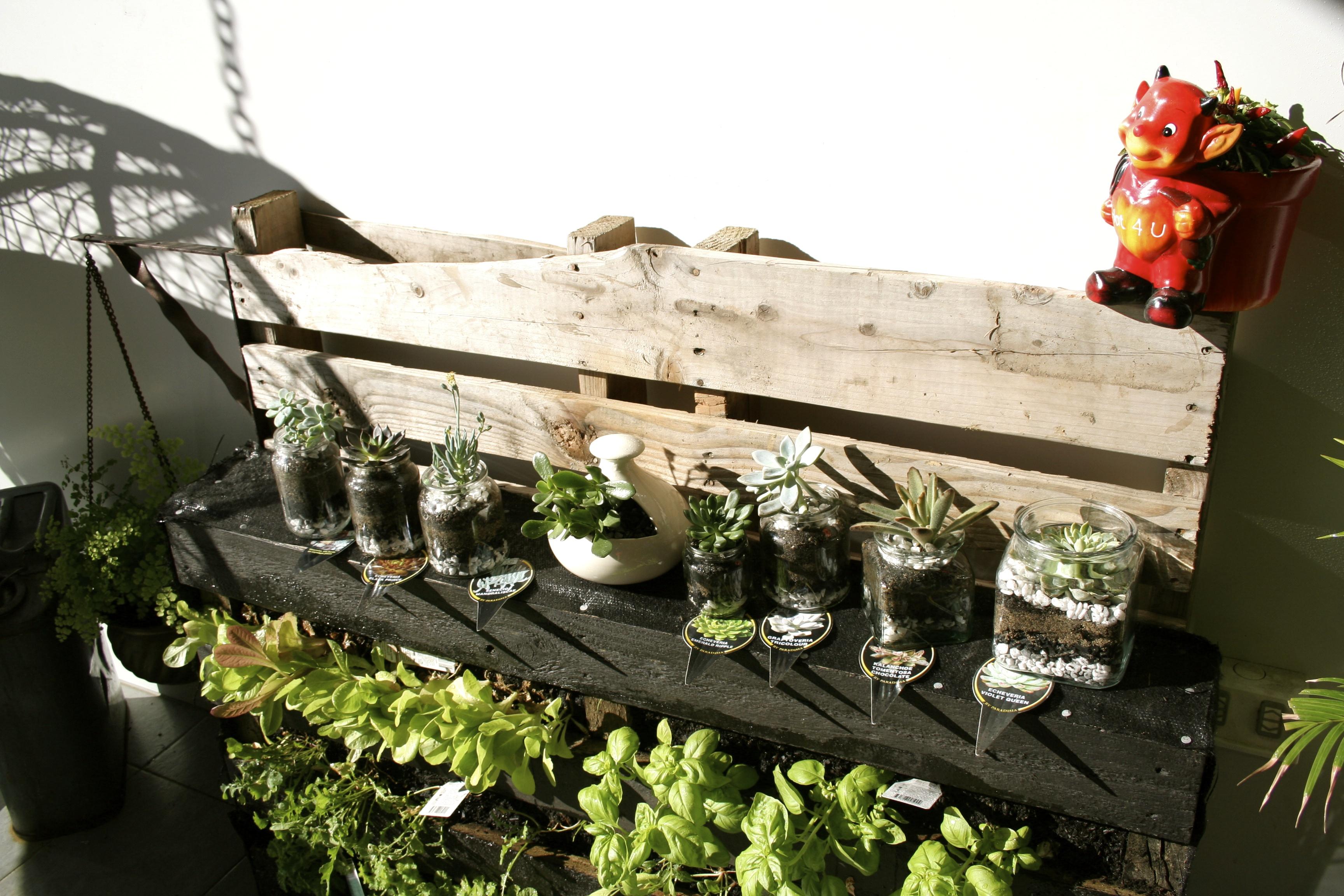 Diy Succulents Reusing Glass Jars Gone Pickin